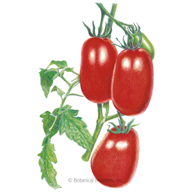 Italian Roma Bush Tomato Seeds