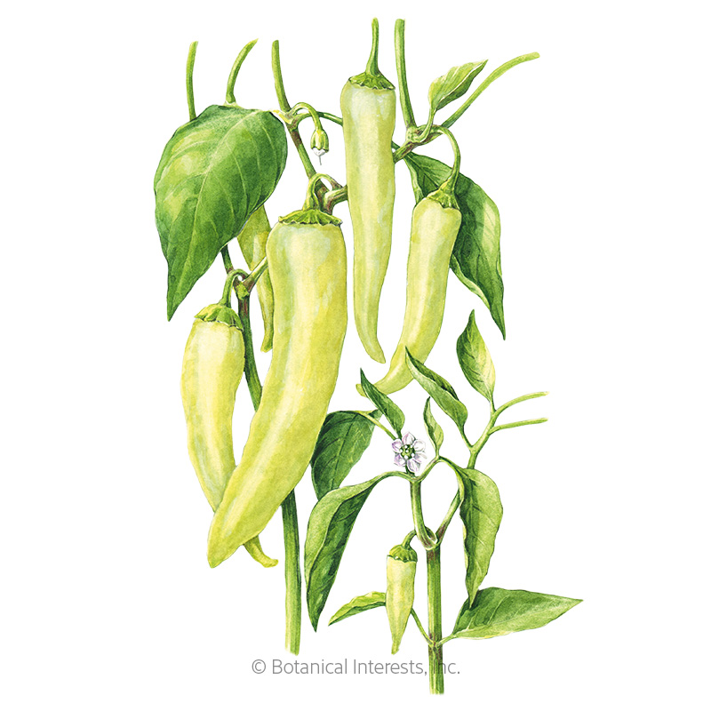 Sweet Banana Sweet Pepper Seeds