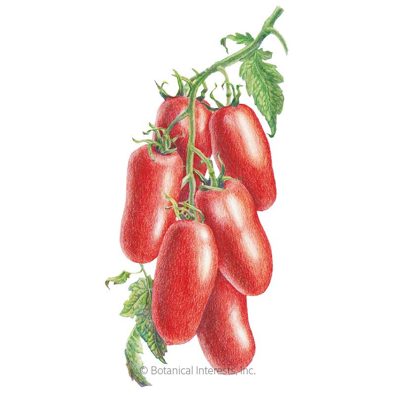 San Marzano Roma Pole Tomato Seeds