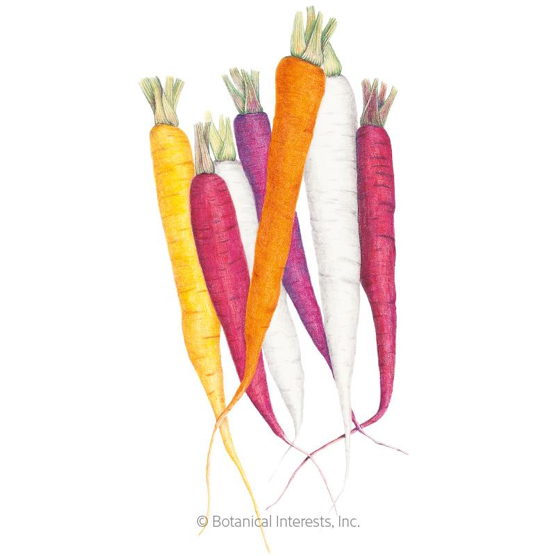 Carnival Blend Carrot Seeds