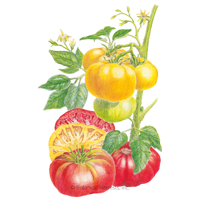 Brandywine Red & Yellow Blend Pole Tomato Seeds