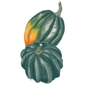 Sweet REBA Winter Acorn Squash Seeds