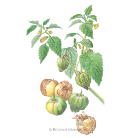 Pineapple Tomatillo Seeds