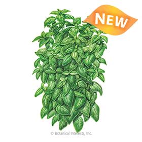 Everleaf Emerald Towers Basil Seeds