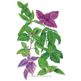 Custom Blend Basil Seeds