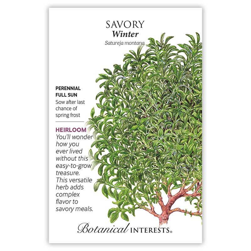 Winter Savory Seeds       view 3