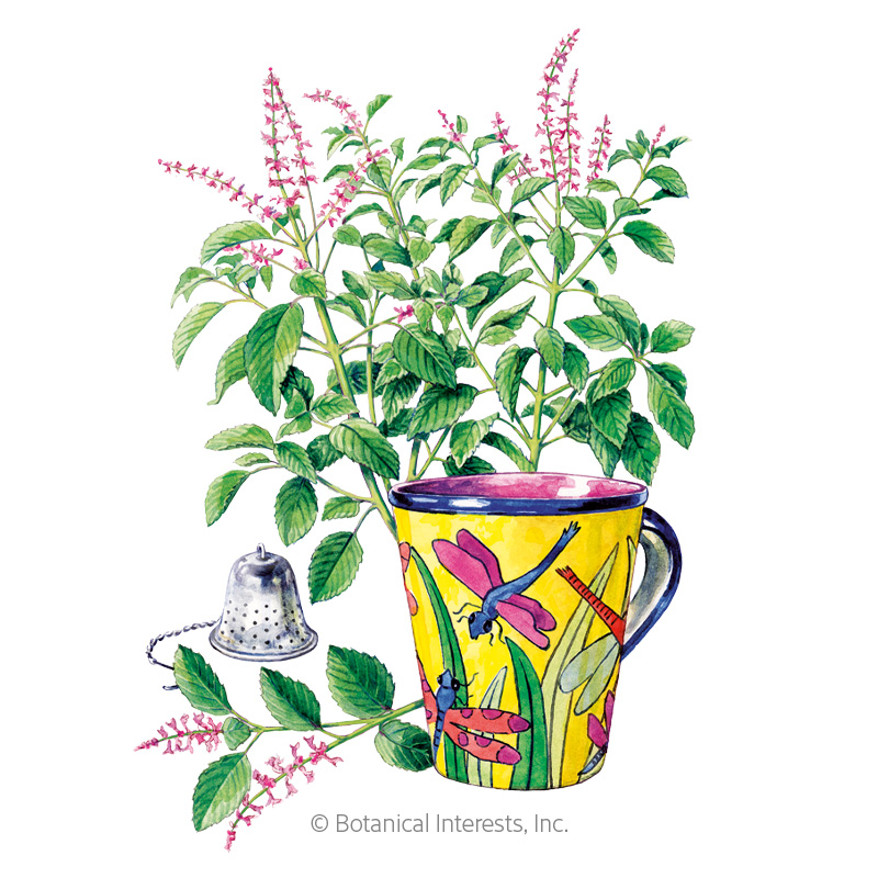 Tulsi Holy Basil Seeds