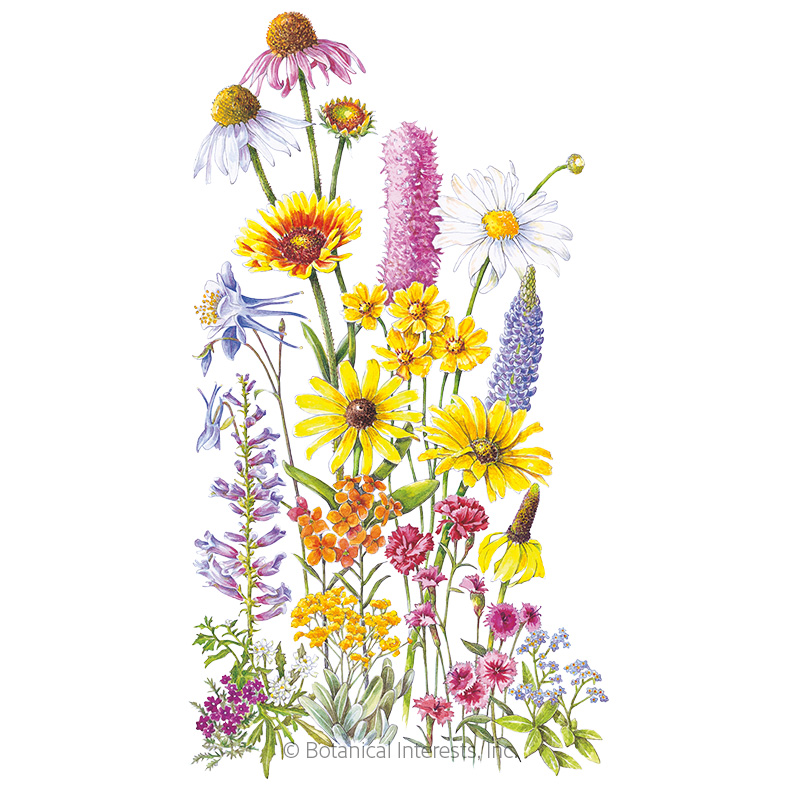Perennial Bloom Flower Mix Seeds