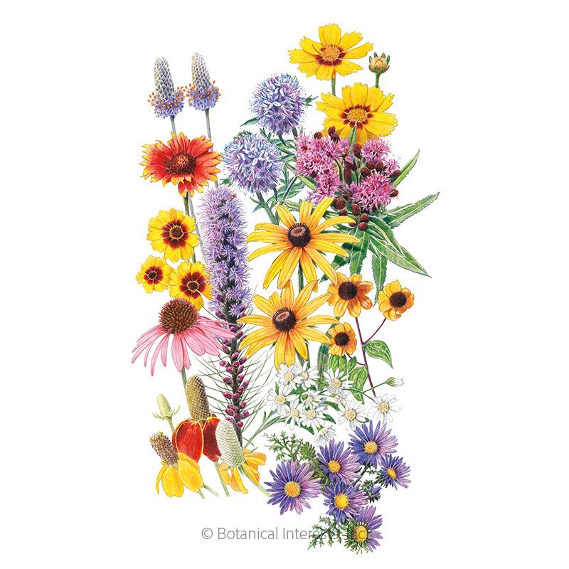Prairie Splendor Flower Mix Seeds