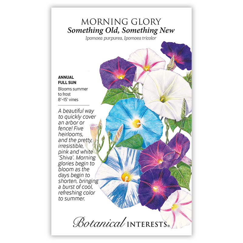 Something Old Something New Morning Glory Seeds