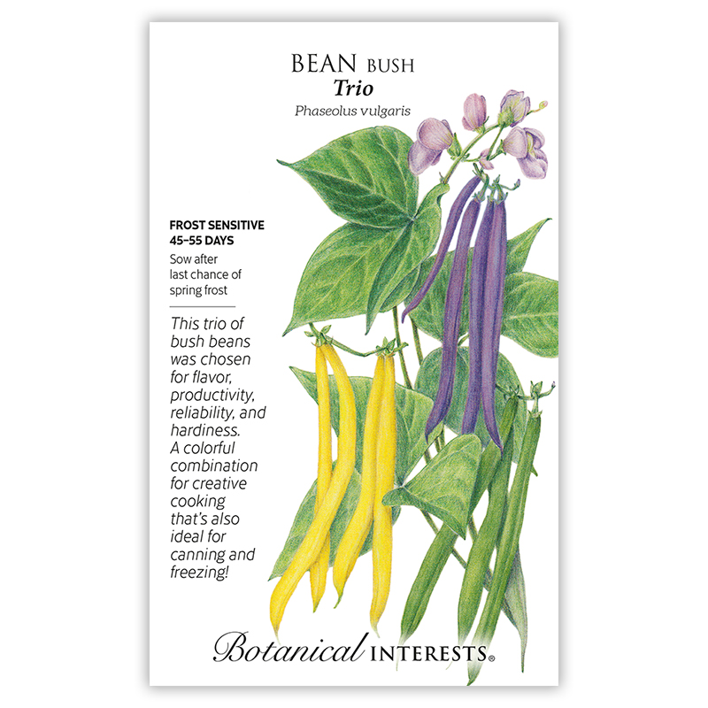 Trio Bush Bean Seeds
