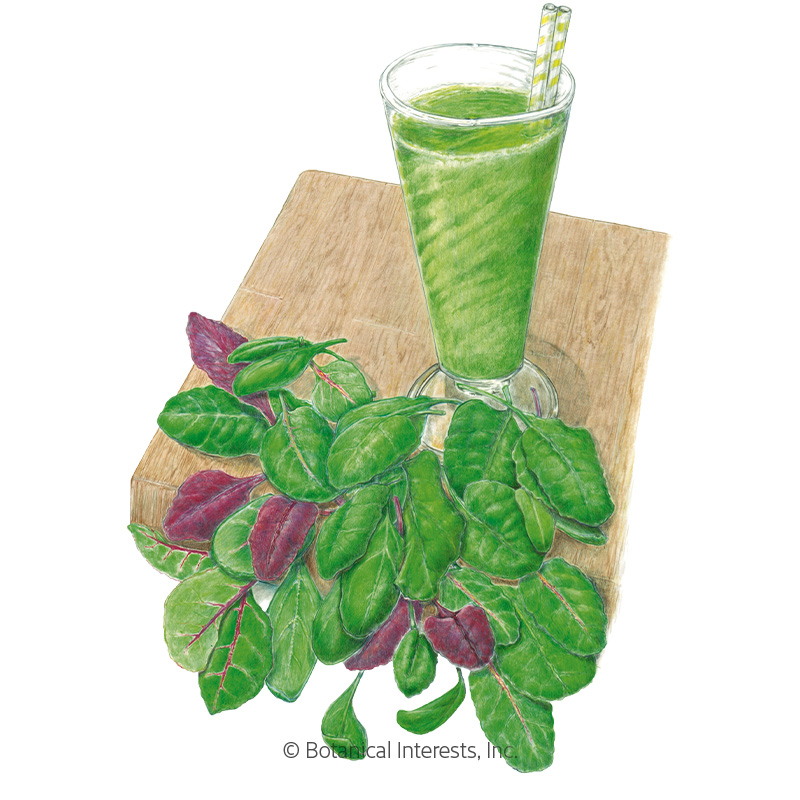 Smoothie Mix Baby Greens Seeds