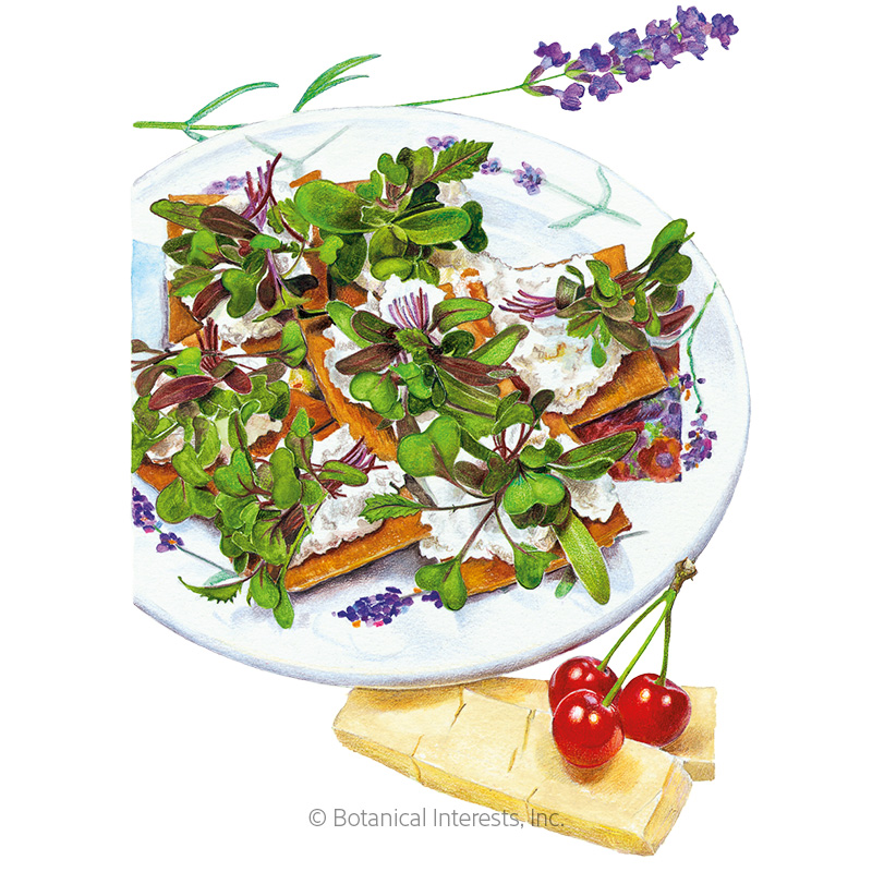 Mild Mix Microgreens Seeds