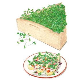 Mellow Blend Microgreens Seeds