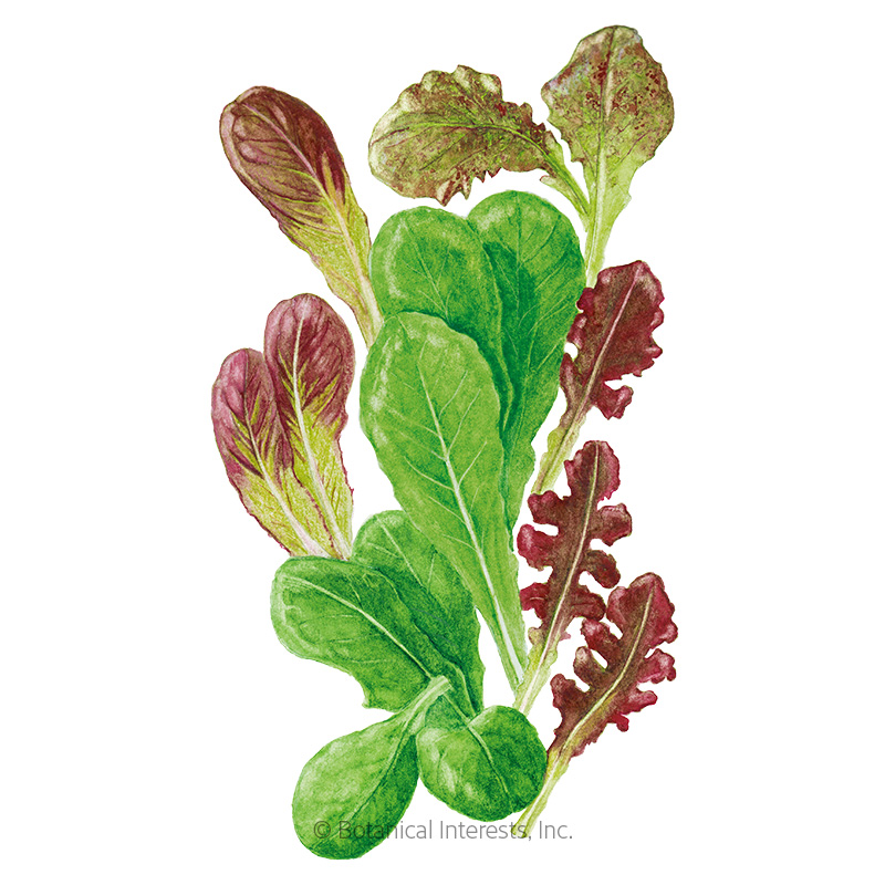 Market Day Lettuce Mesclun Baby Greens Seeds