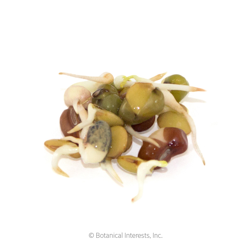 Bean Mix Sprouts Seeds