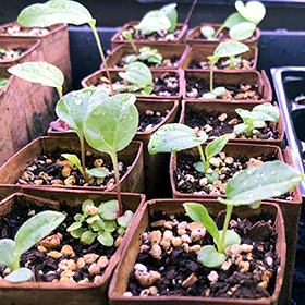 Top 5 Reasons to Garden from Seed