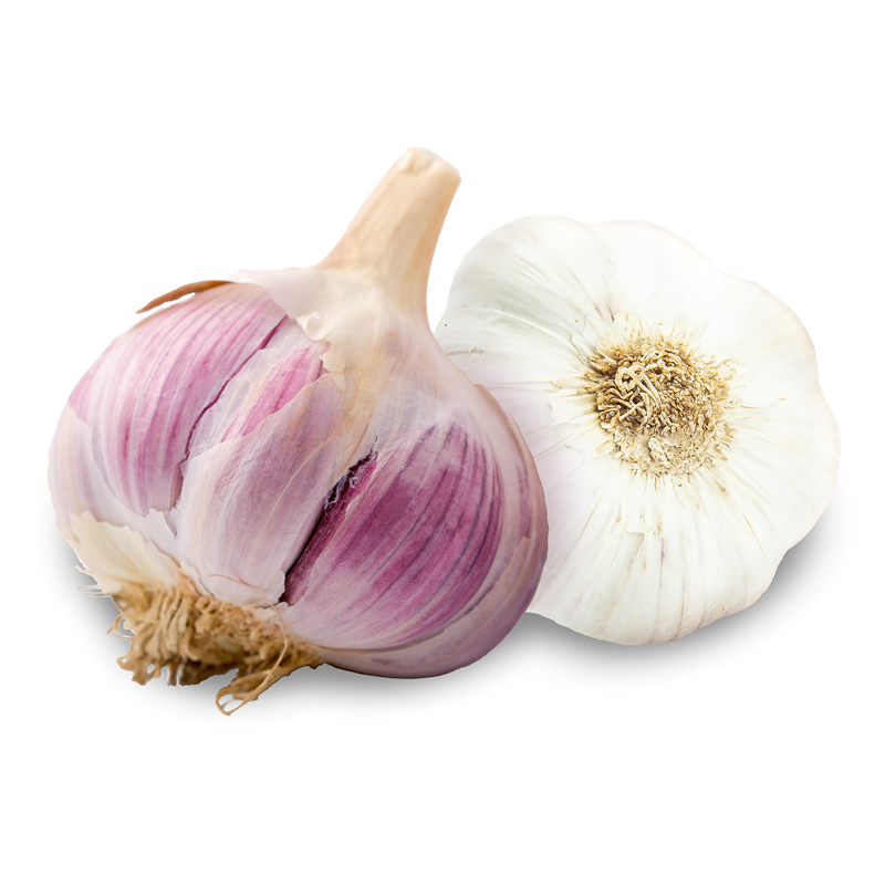 Killarney Red Hardneck Garlic