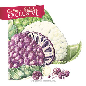 Chef's Choice Blend Cauliflower