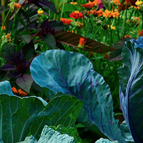 6 Steps to a Greener Garden