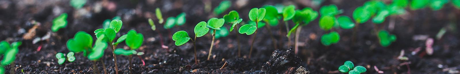 Seed Starting Basics