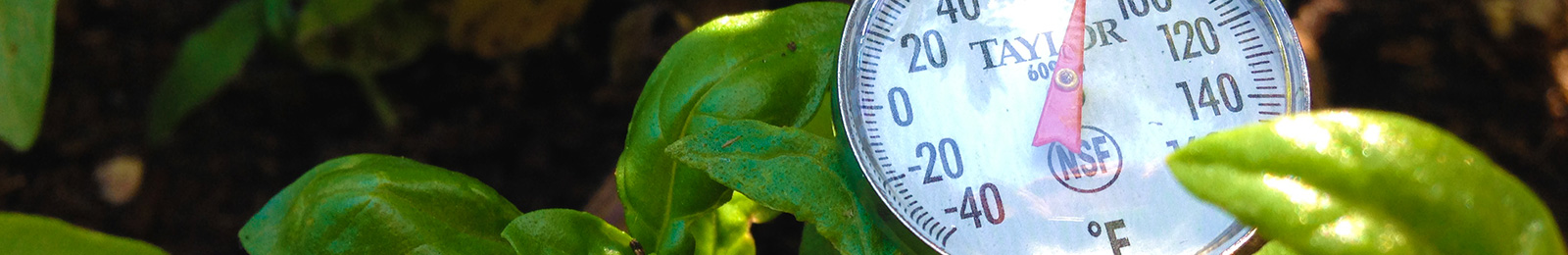 Soil Temperature for Higher Germination