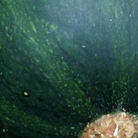 Squash: Pests and Diseases