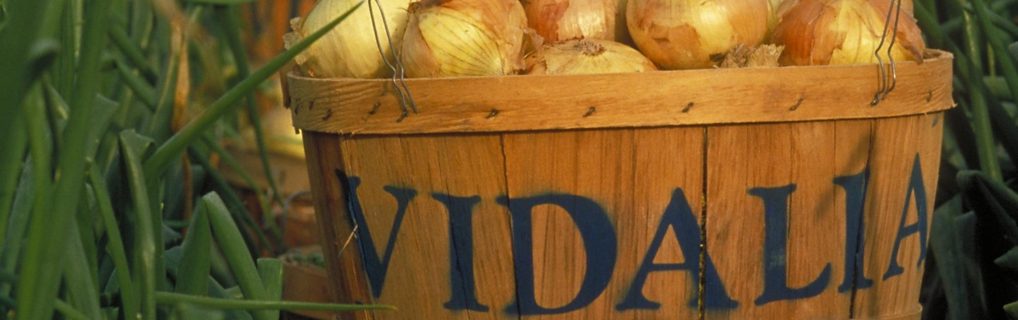 Check out our Top Selling Vidalia Onion Collection!
