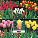 WOW!® Perennial Tulip Collection