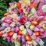 Pastel Tulip Mixture