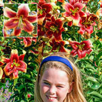 Debby Lily Tree®