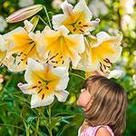 WOW! Lilies