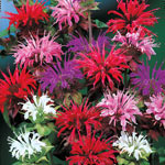 Bee Balm Mixture  Super Sak®