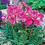 Flowering Fern™  Super Sak®