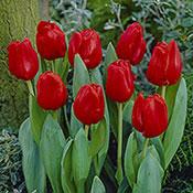 Escape Tulip Super Sak®