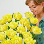 Secret Perfume Tulip