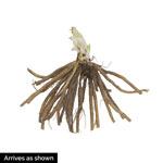 Black Arrowhead Daylily