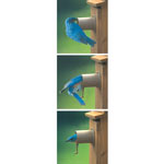 Birdhouse Protector
