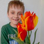 Engadin Tulip