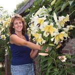 Belcastro Lily Tree®