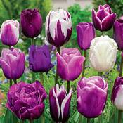 Brecks Enchanted Evening<sup>&trade;</sup> Tulip Mixture
