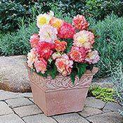 Brecks Planter Category