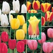 Brecks Wow!<sup>&reg;</sup> Perennial Tulip Collection