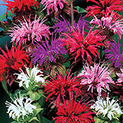 Bee Balm Mixture Super Sak