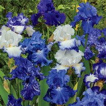 Heavenly Blues Iris Mixture Super Sak®