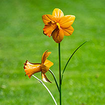 Daffodil Garden Stakes