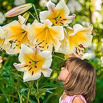 Miss Peculiar Lily Tree