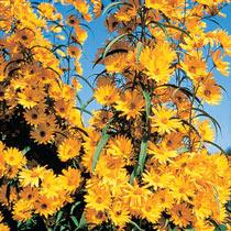 Other Sun Perennials
