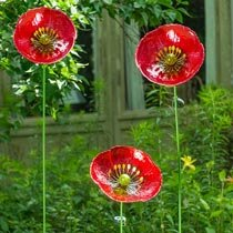 Towering Solar Poppy Stakes