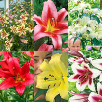 Great Expectations Lily Tree®